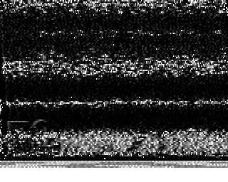 PD2JB image#17